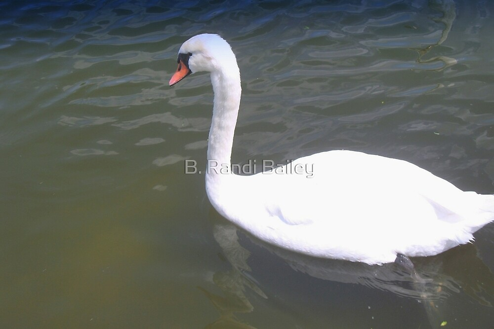 Gliding swan by ♥⊱ B. Randi Bailey