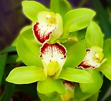 Green Orchids 5 by ALAN MCCRAY