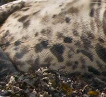 Sleepy Harbor Seal Sticker