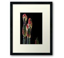 Tall Stalks Framed Print