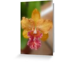 Orange and Pink Cattleya Orchid Greeting Card