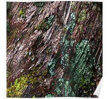 Nature's Patina Poster