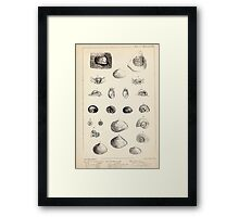 Proceedings of the Zoological Society of London 1848 - 1860 V5 Mollusca 008 Framed Print