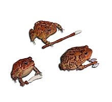 Battle Toads - Combat Readiness Photographic Print