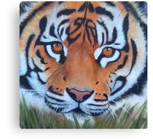 Prowling tiger (12) Canvas Print