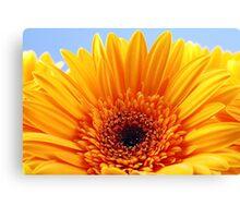Beautiful Yellow Sunflower Canvas Print