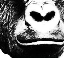 Harambe the gorilla.  Sticker