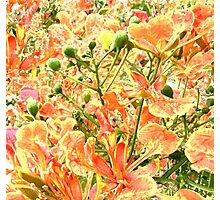 Abstract Summer Floral Photographic Print