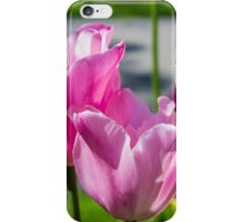Tulips from Amsterdam iPhone Case/Skin