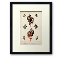 Proceedings of the Zoological Society of London 1848 - 1860 V5 Mollusca 037 Framed Print