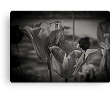 A Study of Tulips Canvas Print