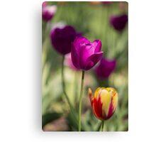 Study of Tulips Canvas Print
