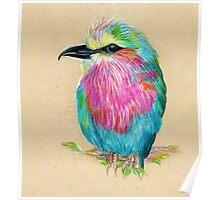 Lilac Breasted Roller Bird Poster