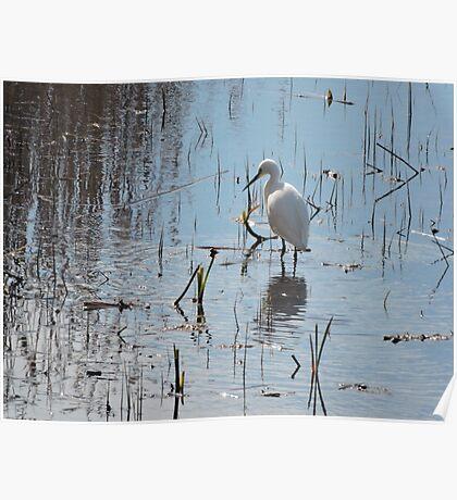 Little Egret: Grace  Poster