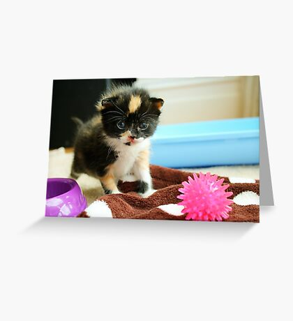 Tiny tortie Greeting Card