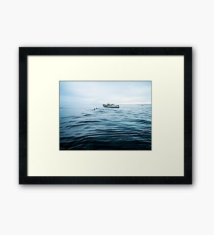Dolphins in open sea Framed Print