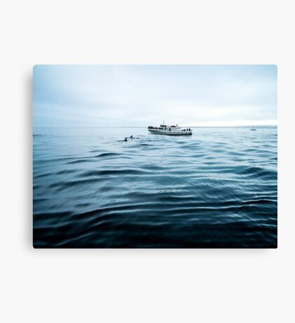 Dolphins in open sea Canvas Print