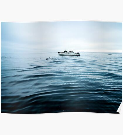 Dolphins in open sea Poster
