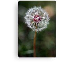 Dandelion Seed Head Canvas Print