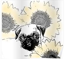 Pug in Sunflowers Poster