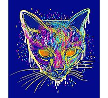 candy cat Photographic Print