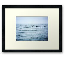 Dolphins in open water Framed Print