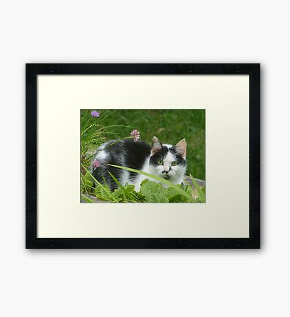 Sitting Comfortably Framed Print