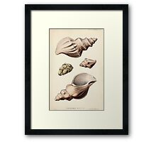 Proceedings of the Zoological Society of London 1848 - 1860 V5 Mollusca 007 Framed Print