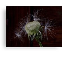 Bad hair day Canvas Print