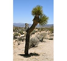 Joshua Tree National Park, California Photographic Print