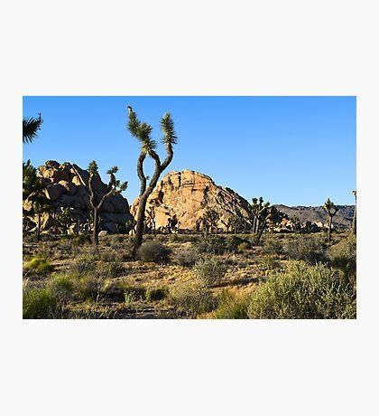 Joshua Tree National Park, California Photographic Print