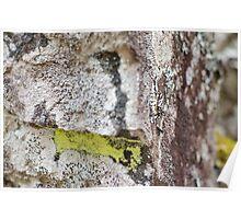 Moss Across Poster
