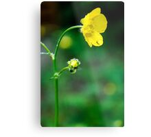 What's Up Buttercup? Metal Print