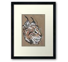 Bobcat - The Hurried Hawk Framed Print