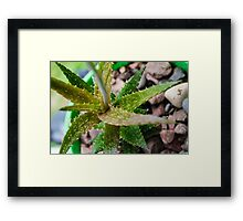 Spike & Spiral Framed Print