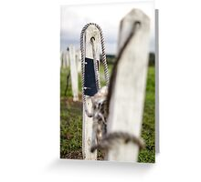 Crooked Ways Greeting Card
