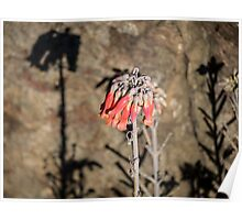 Wildflowers along the Cliff, Mother of Millions 2 Poster