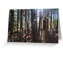 Staggered Serenity Greeting Card