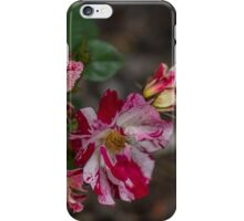 Great colours iPhone Case/Skin
