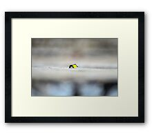 The Very Fuzzy Caterpillar Framed Print