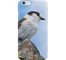 Gray Jay With Blue Sky Background iPhone Case/Skin