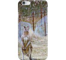 Eastern Grey Kangaroos 2 iPhone Case/Skin