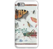 Insects and garden pansy, . Jan van Kessel the Elder iPhone Case/Skin