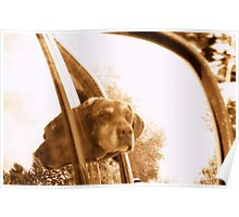 DOUBLE VISION CHOCOLATE LAB Poster