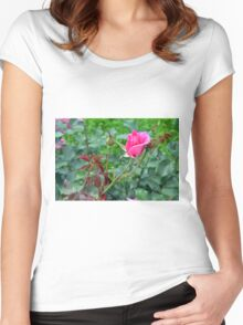 Pink roses in the garden. natural background. Women's Fitted Scoop T-Shirt