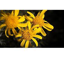 Yellow, yellow, yellow! Photographic Print