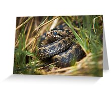 Snake in the Grass Greeting Card