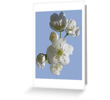 cherries in blosssom on blue serenity Greeting Card