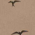 Two Terns by Elizabeth  Lilja