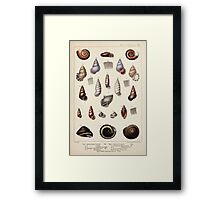 Proceedings of the Zoological Society of London 1848 - 1860 V5 Mollusca 013 Framed Print